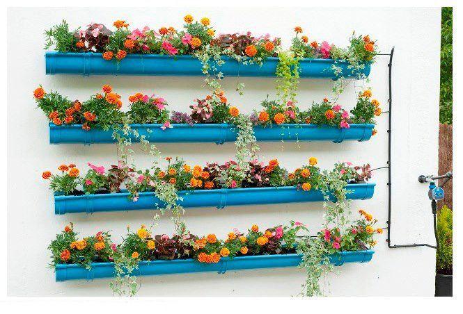 flores para jardim baratas
