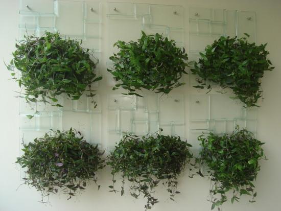 plantas para jardim vertical de garrafa petlindo jardim vertical para