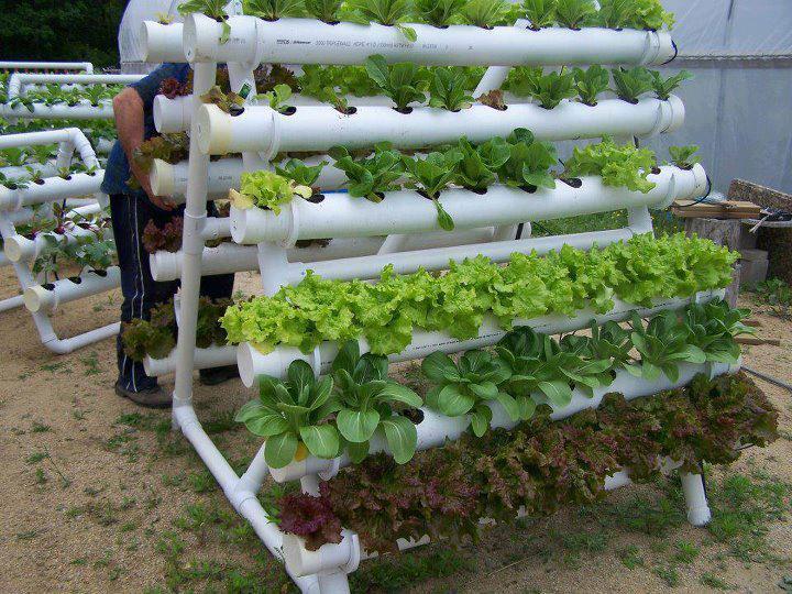 Horta em casa saiba como cultivar - Jardin hidroponico ...