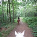 cavalos_namorados