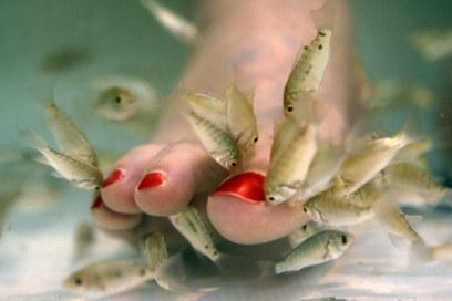 Peixes-que-fazem-as-unhas-dos-pés-na-Inglaterra-01