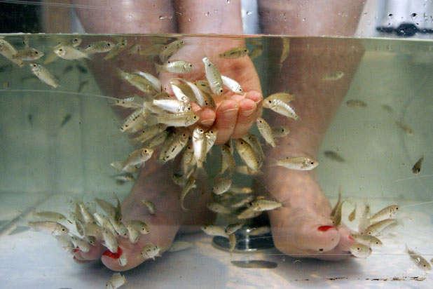 Peixes-que-fazem-as-unhas-dos-pés-na-Inglaterra-02