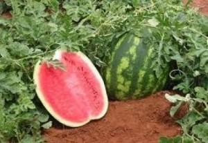Alimentos-que-Hidratam-e-Devem-ser-Acrescentados-no-Prato-02-300x207