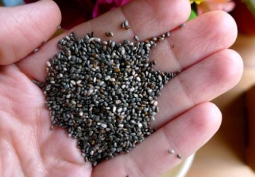 Semente-de-Chia-Benefícios-–-Como-consumir-semente-de-chia-01