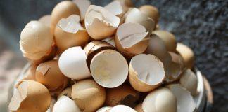 Casca de ovo para plantas